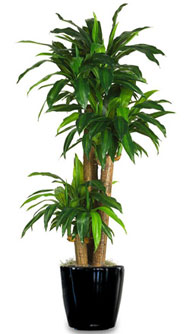 Green Jungle Inc Interior Plantscaping And Design